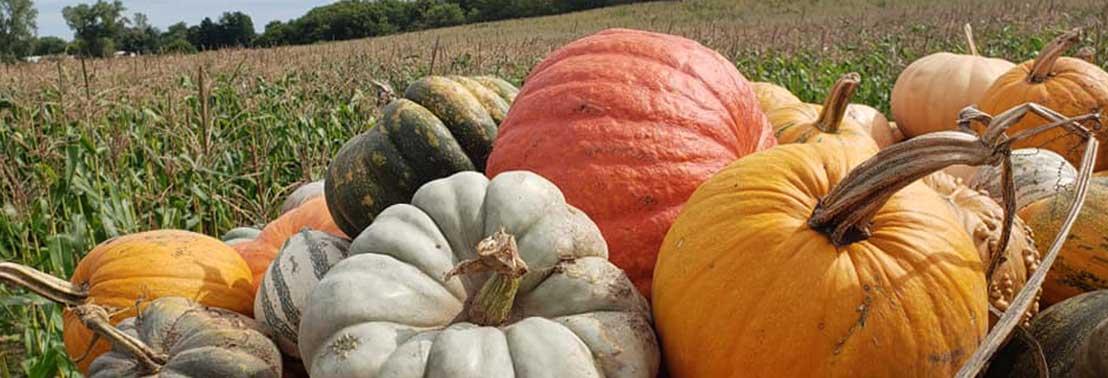 home_sililoquy_pumpkin_1108x378